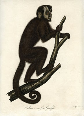 Instant Art Printable Download – Fabulous Monkey – Natural History