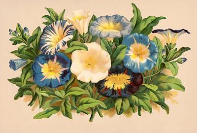 Gorgeous Morning Glories – Instant Art Printable