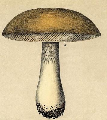 Vintage Clip Art – Mushroom