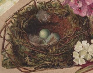 Darling Nest