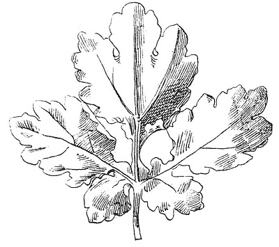 Vintage Clip Art – Beautiful Black and White Leaf Images