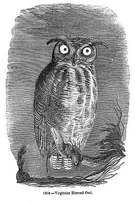 Vintage Halloween Clip Art – Spooky Owl