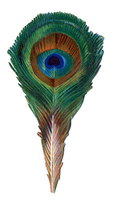 Antique Graphic Small Peacock Feather The Graphics Fairy