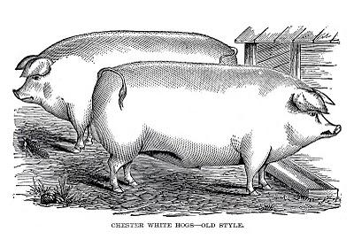 Vintage Farm Clip Art – 2 Portly Pigs