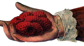 Antique Image – Victorian Hand with Raspberries