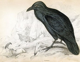 Antique Clip Art – 1830's Raven – Natural History