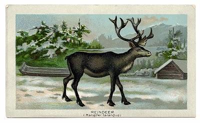 Antique Christmas Clip Art Image – Wonderful Reindeer