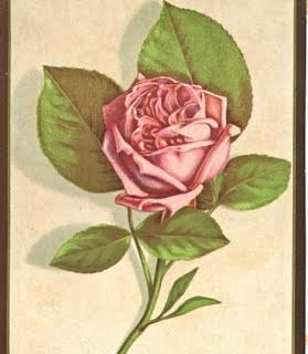 Free Vintage Clip Art – Perfect Pink Rose