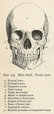 Vintage Anatomy Clip Art – Bones & Skull – Halloween