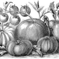 Black and White Tomatoes Clip Art