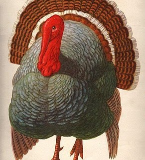Thanksgiving – Gorgeous Turkey