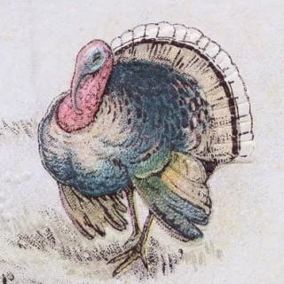 Free Thanksgiving Clip Art – Turkey Postcard