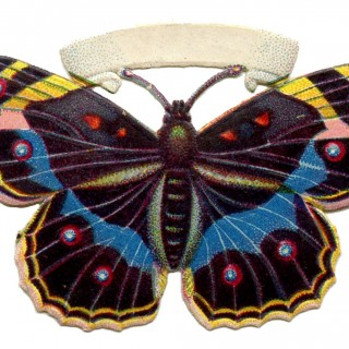 Vintage Butterfly Image – Spotted