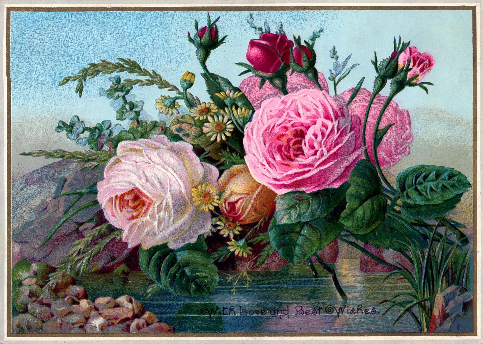Free Public Domain Vintage Image Roses