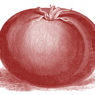 Free Public Domain Images – Vintage Tomato