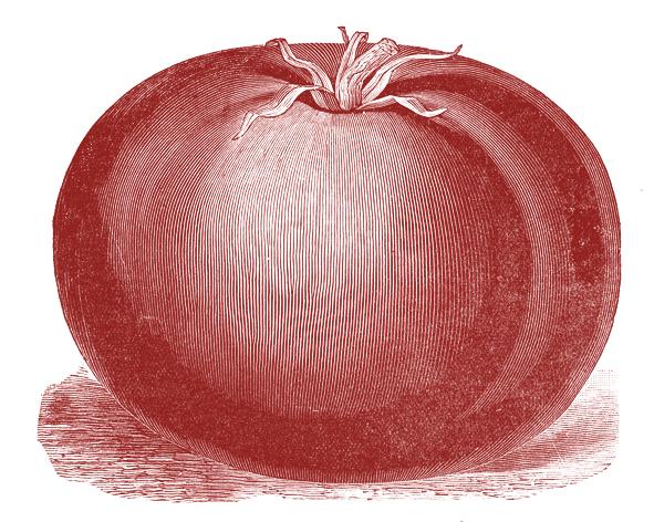 Free Public Domain Image Tomato