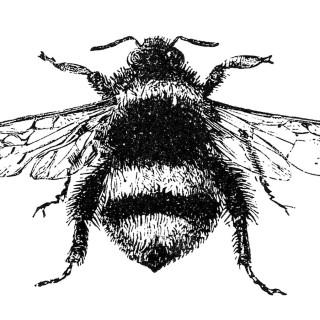 Free Stock Image – Vintage Bumblebee