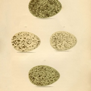 Vintage Image – Speckled Eggs