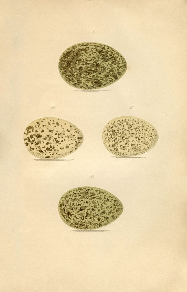 Vintage Speckled Eggs Image