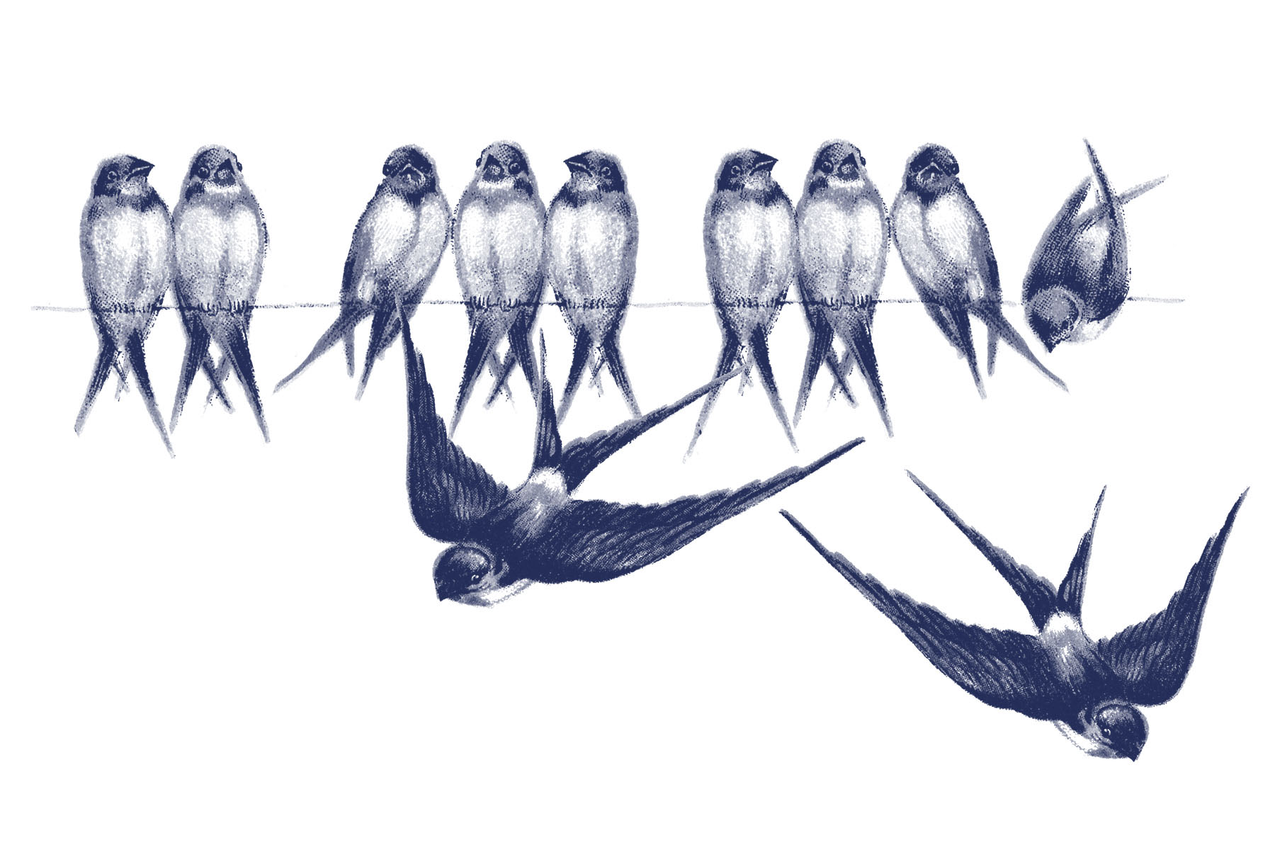 Vintage bird images swallows on line the graphics fairy - The graphics fairy ...