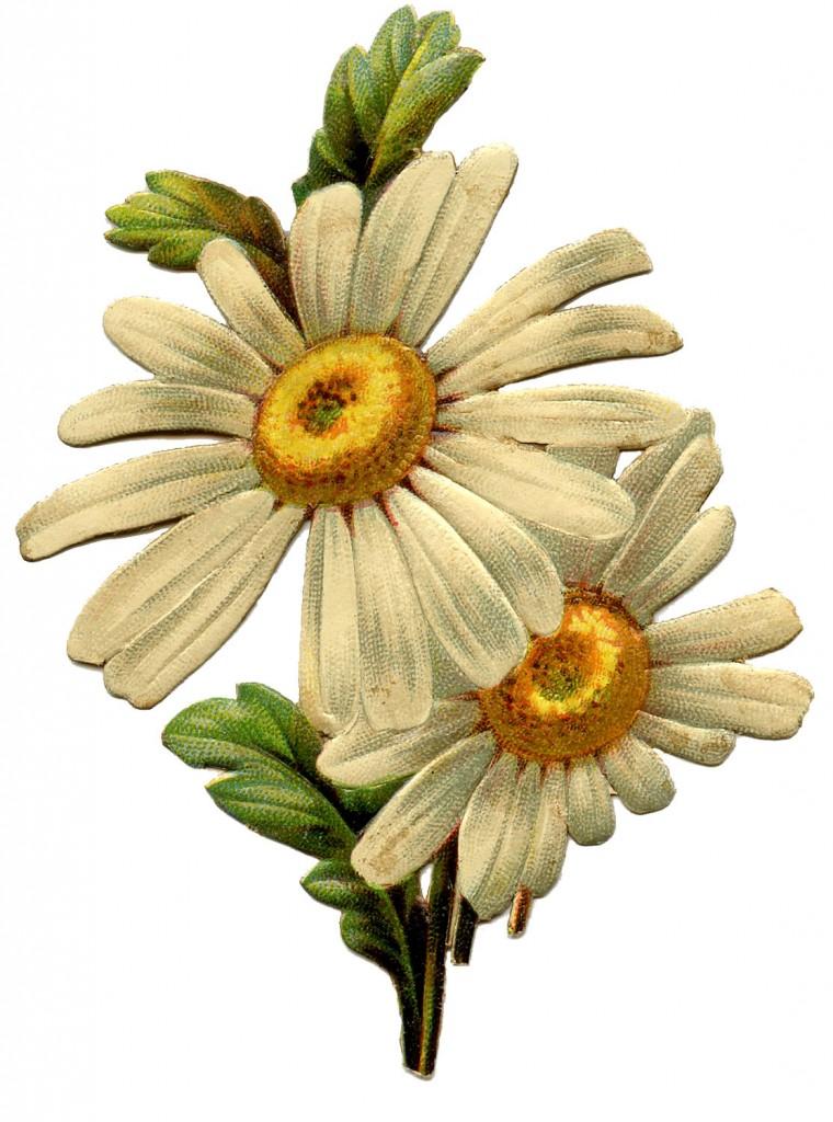 Vintage Daisy Scrap Image