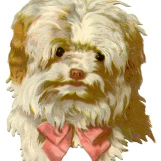 Vintage Dog Image – Scruffy with Bow