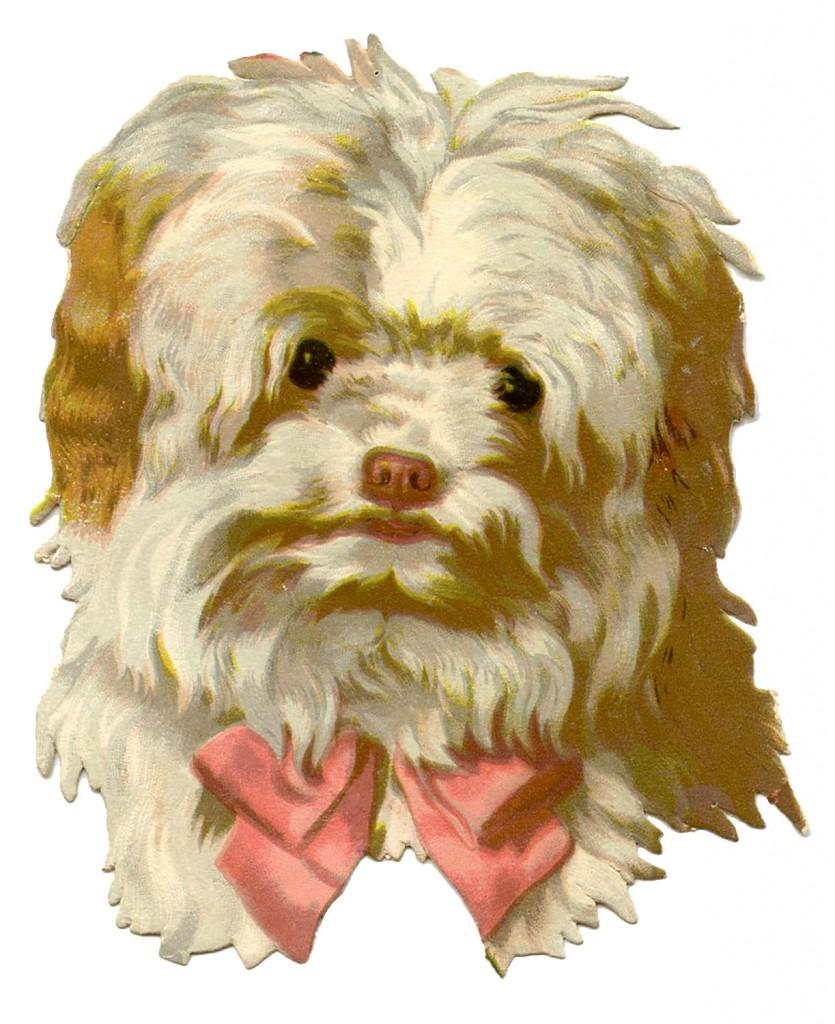 Vintage Dog Image Scruffy