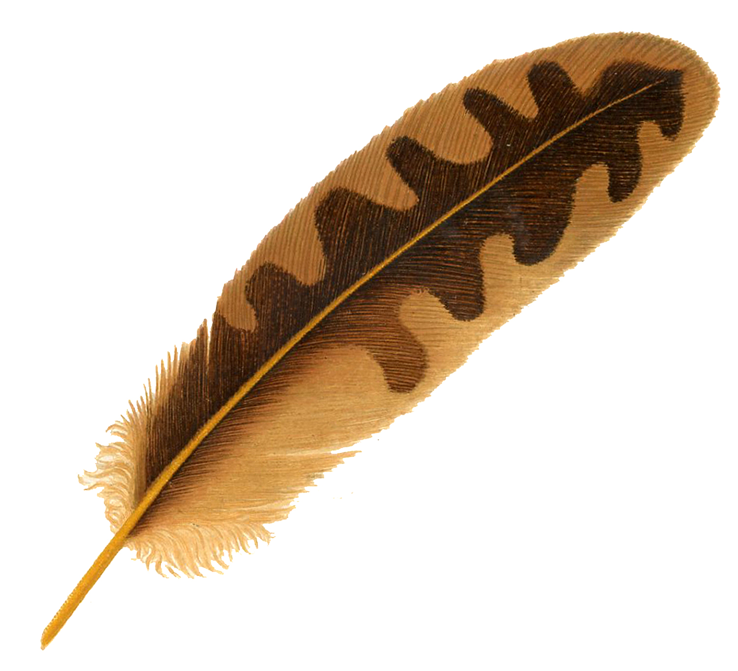 Vintage Feather Image Brown