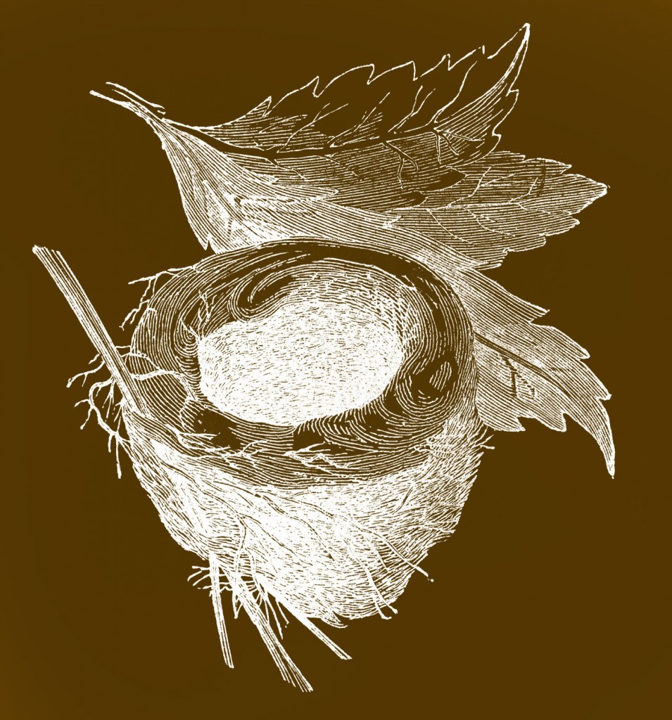 Vintage Images Empty Nest Brown