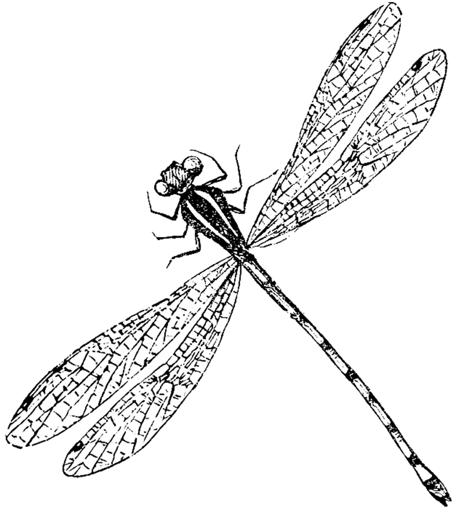 Antique Dragonfly Image