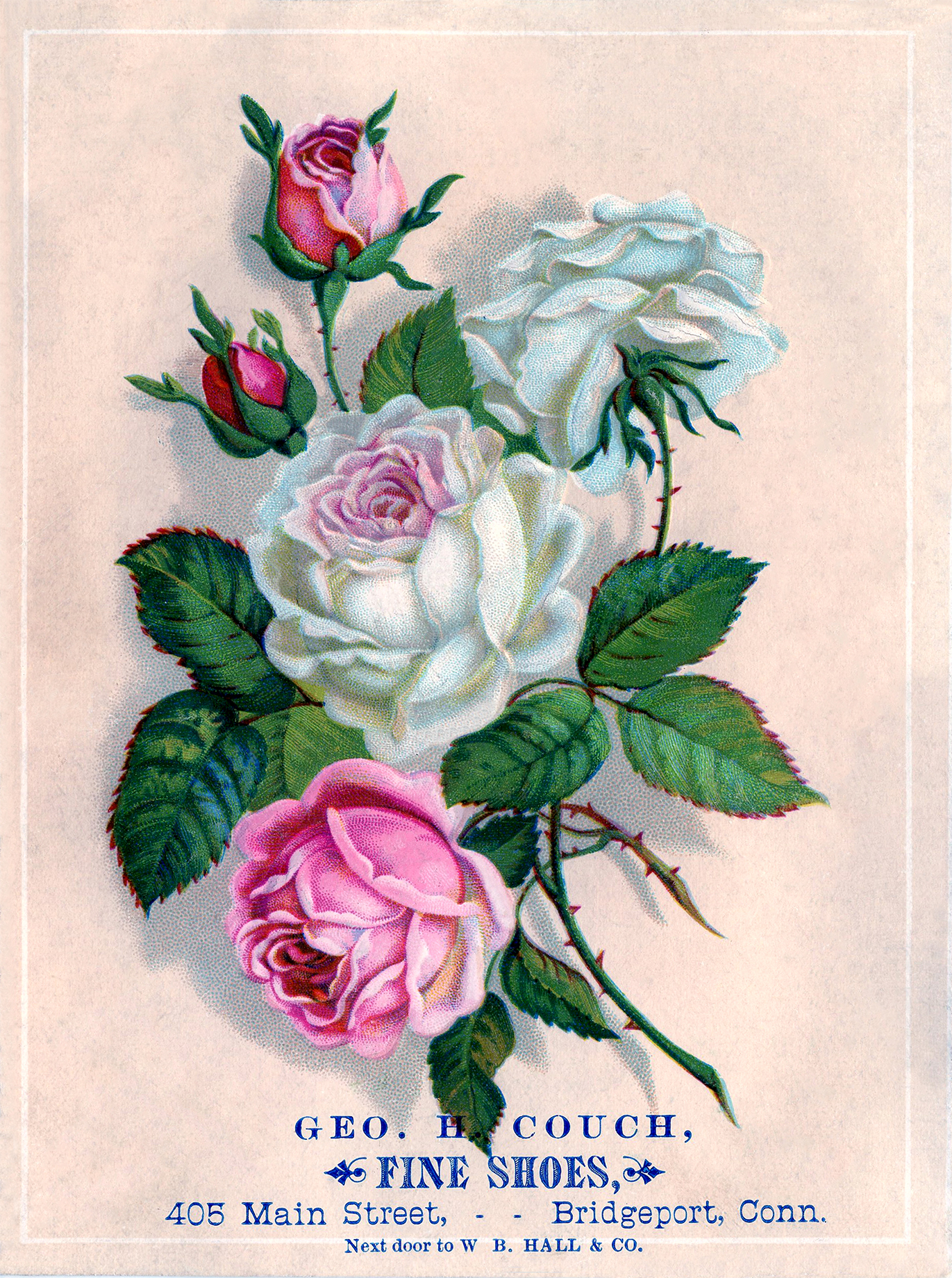 Free Stock Images Roses Pink And White The Graphics Fairy