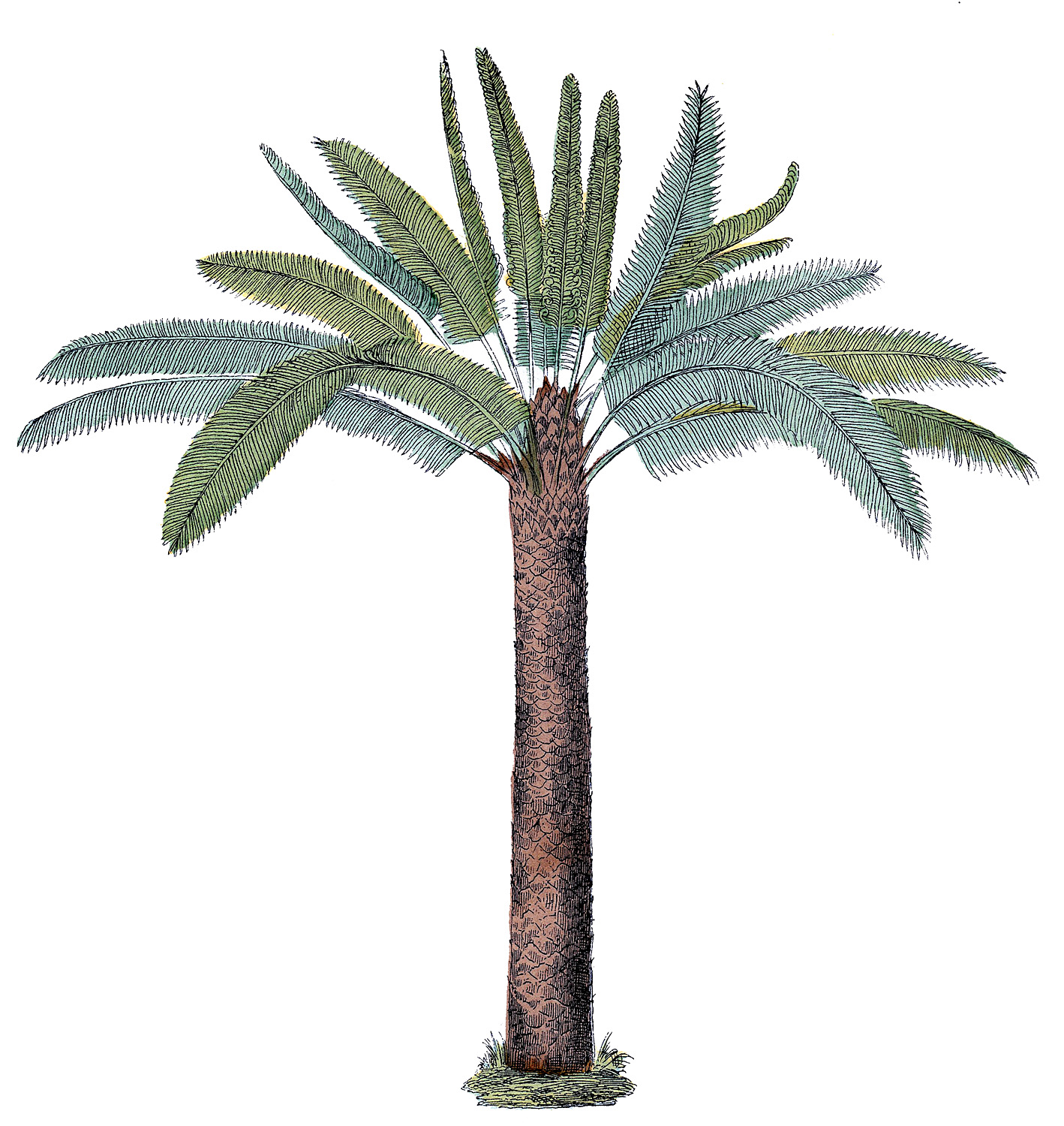 Vintage Palm Tree Graphic  The Graphics Fairy