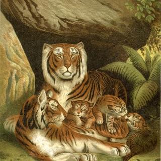 Vintage Tigers Printable