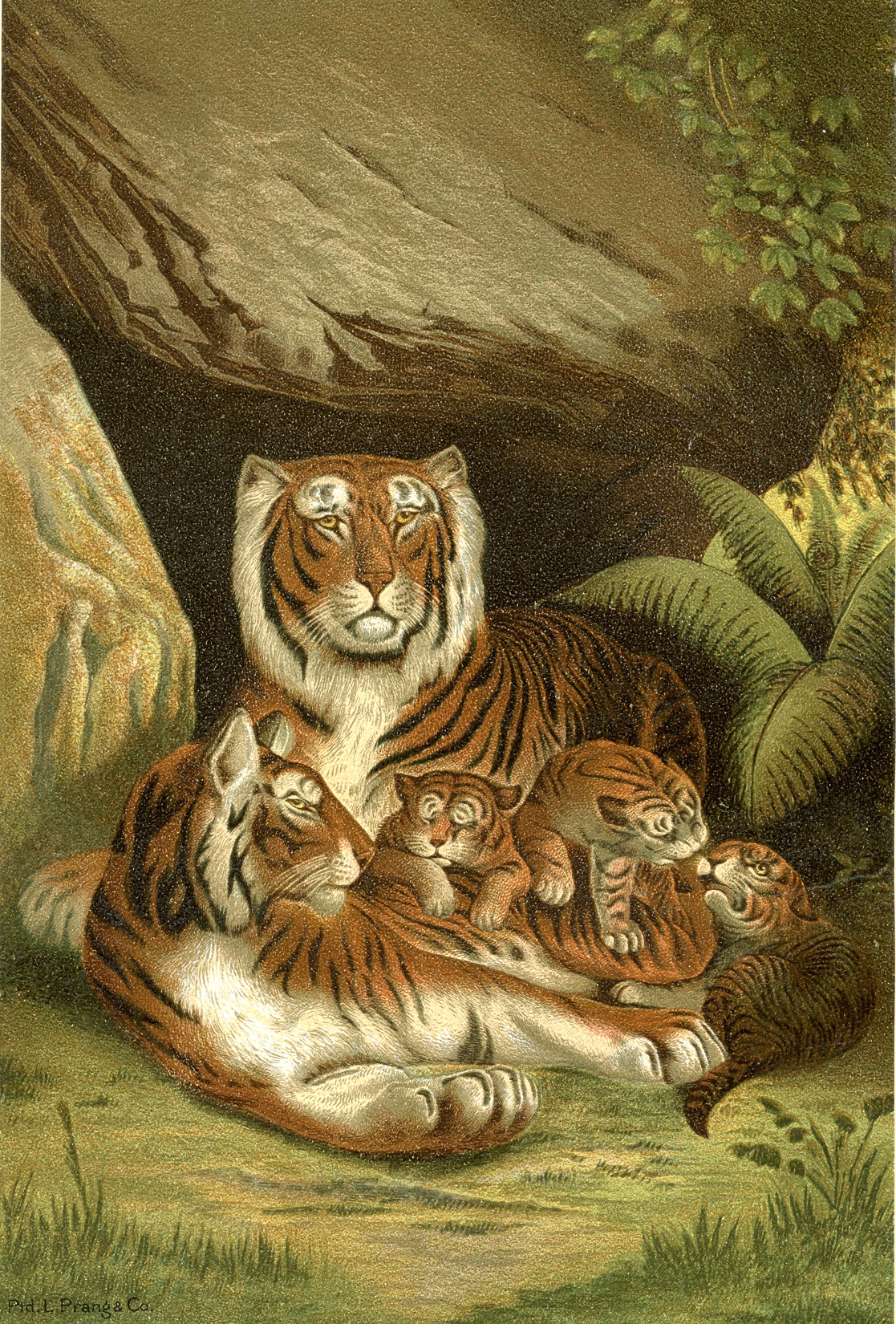 picture about Printable Tiger Pictures named Traditional Tigers Printable - The Graphics Fairy