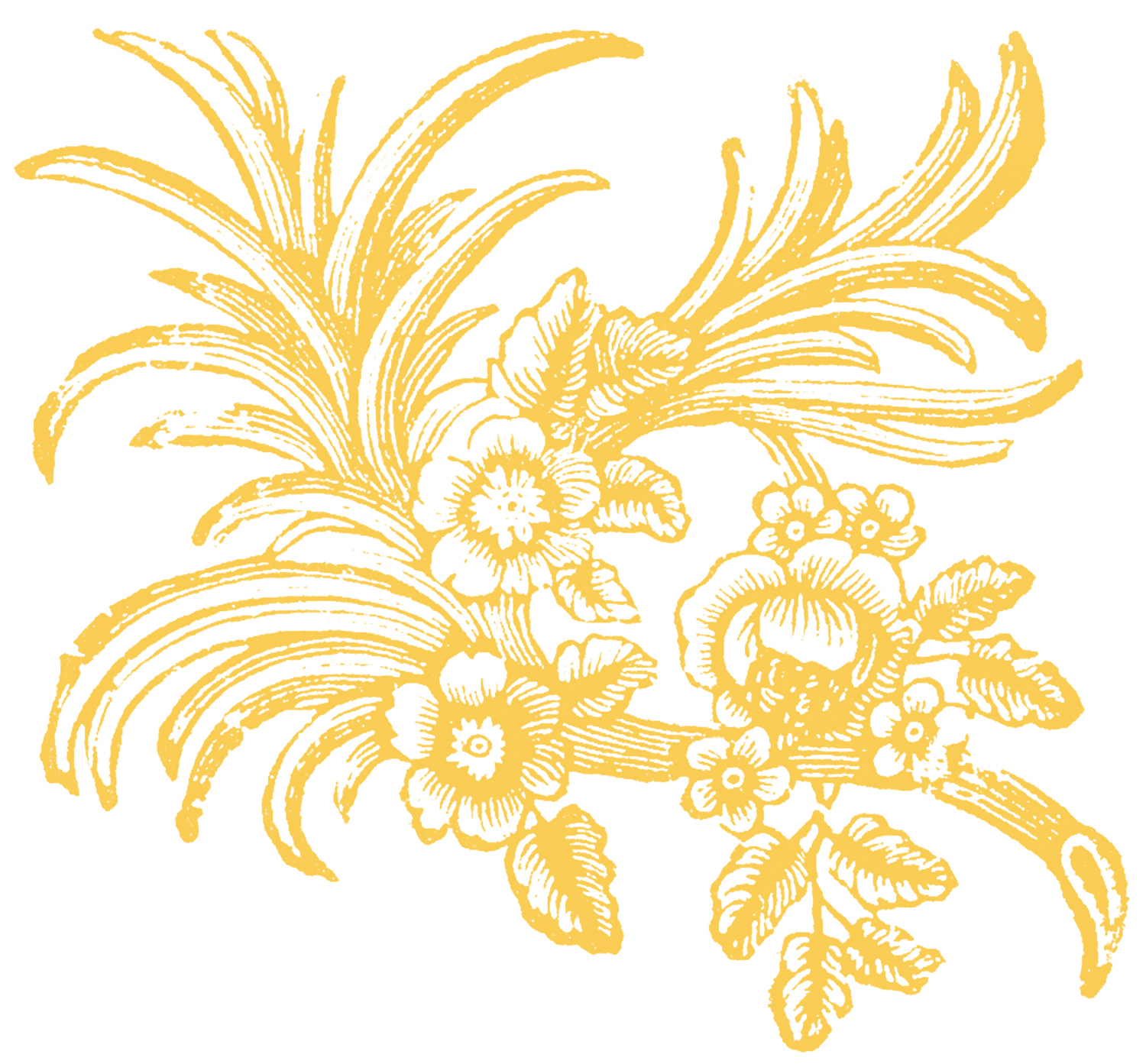 Free floral ornaments the graphics fairy for Graphics fairy