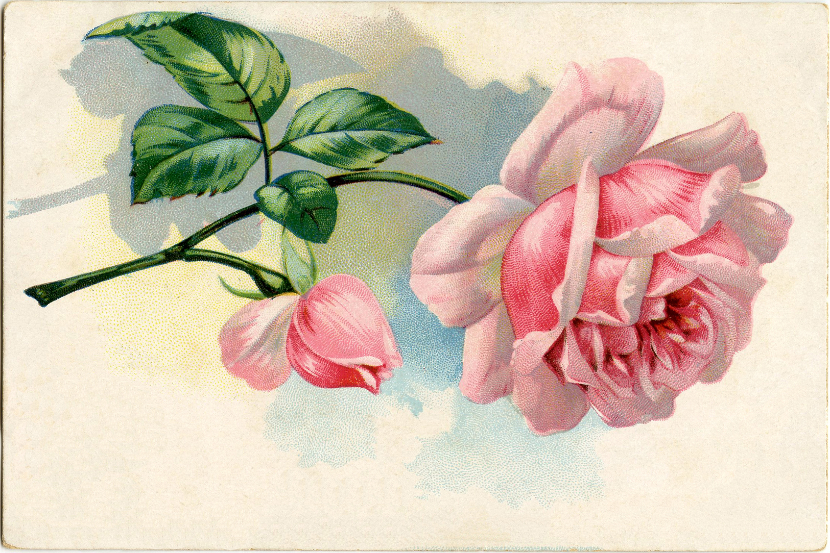 Free Vintage Images Lovely Pink Rose The Graphics Fairy