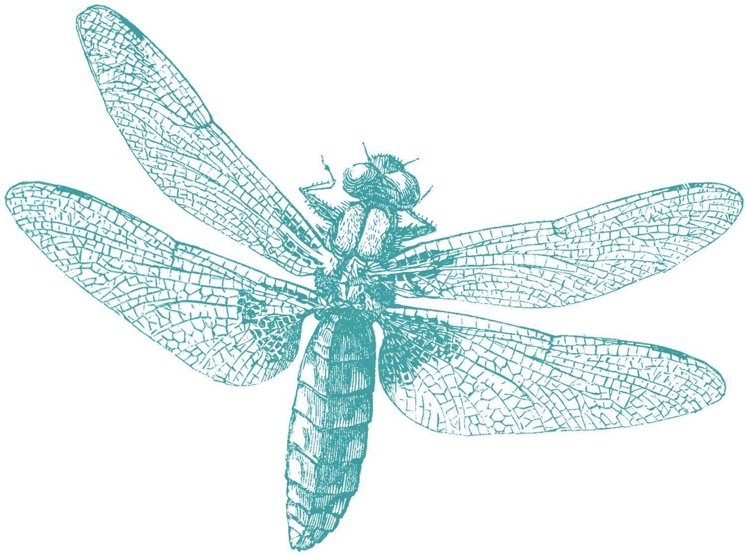 Royalty Free Images - Dragonfly - The Graphics Fairy: thegraphicsfairy.com/royalty-free-images-dragonfly