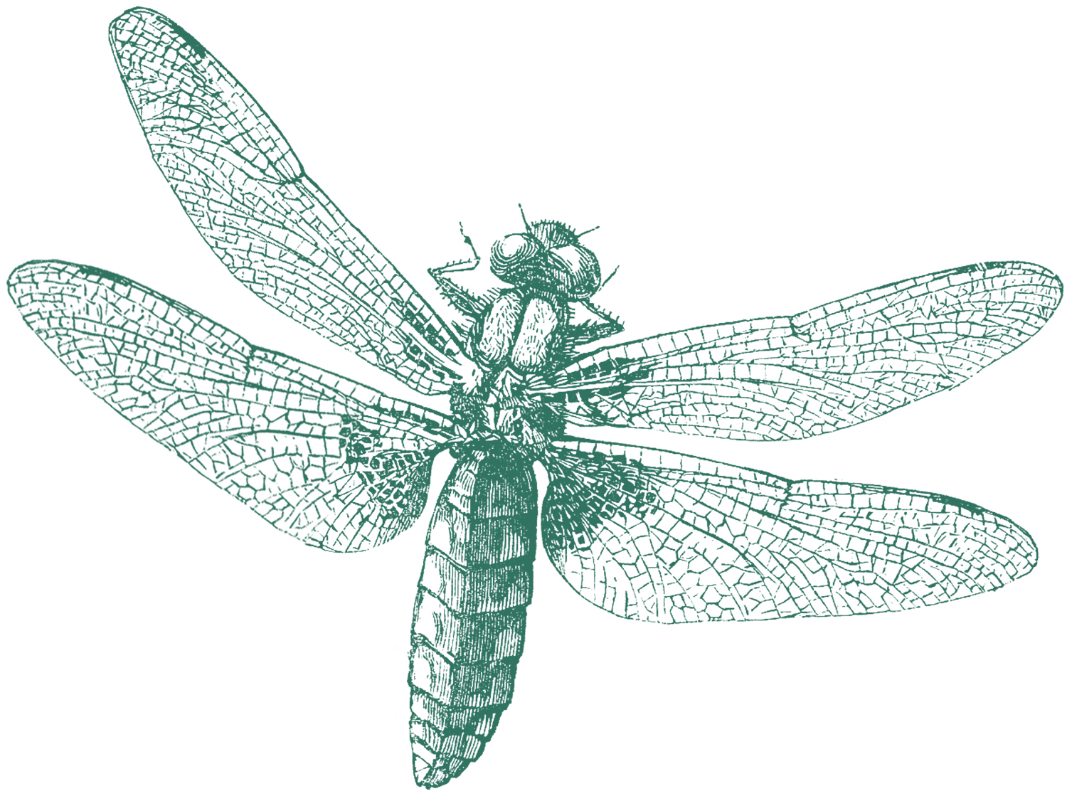Royalty Free Images - Dragonfly - The Graphics Fairy
