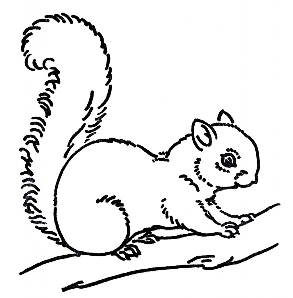 Free Line Art Images - Squirrel Drawings