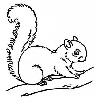 Royalty free Images Squirrel Line Art