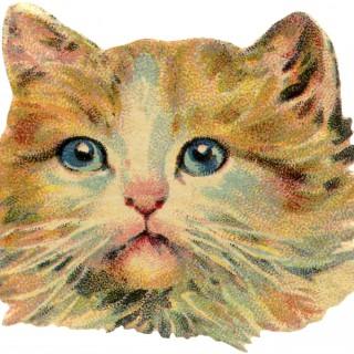 Vintage Cat Image Free
