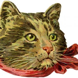 Vintage Cat Picture