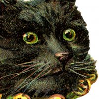 Free-Black-Cat-Image-GraphicsFairy-thumb