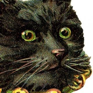 Free Black Cat Image
