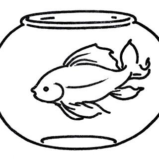Free Clip Art Gold Fish Bowl