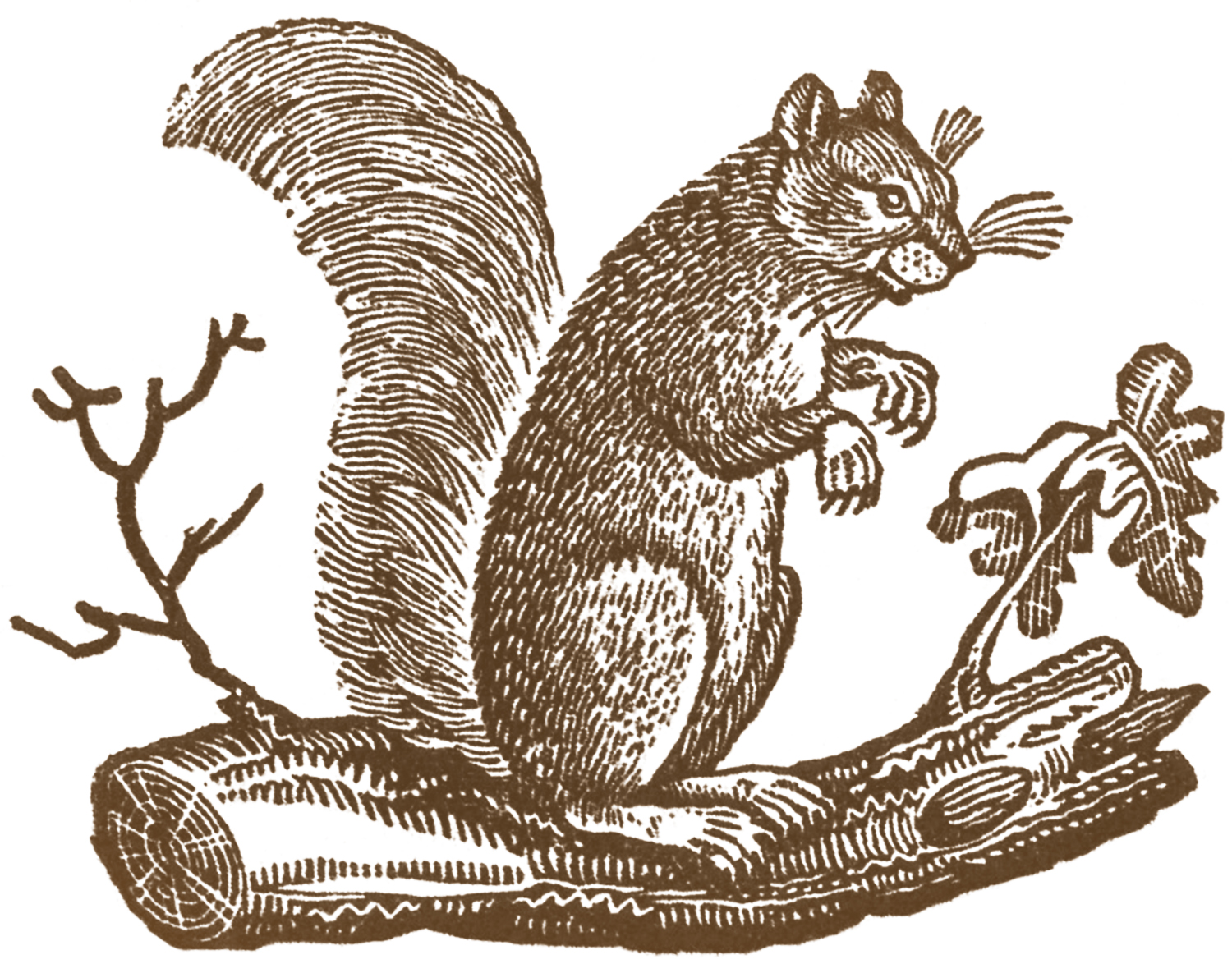 Free Fall Clip Art - Primitive Squirrels - The Graphics Fairy