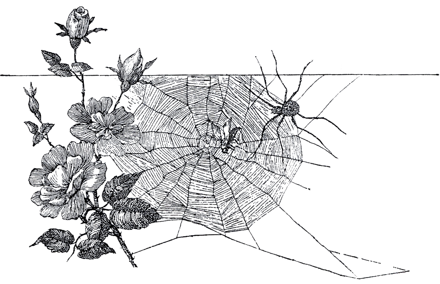 Free Spider Web Image - The Graphics Fairy