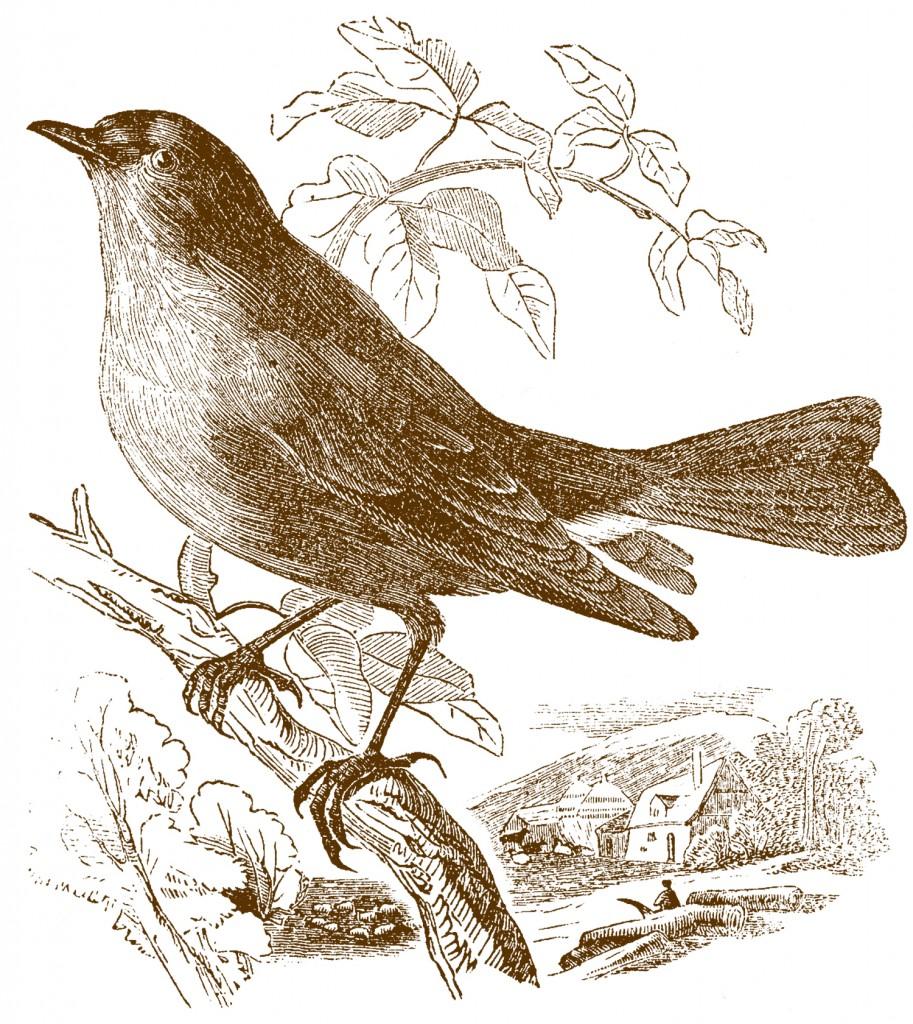 Свободный Склад Изображениями Птиц Коричневый