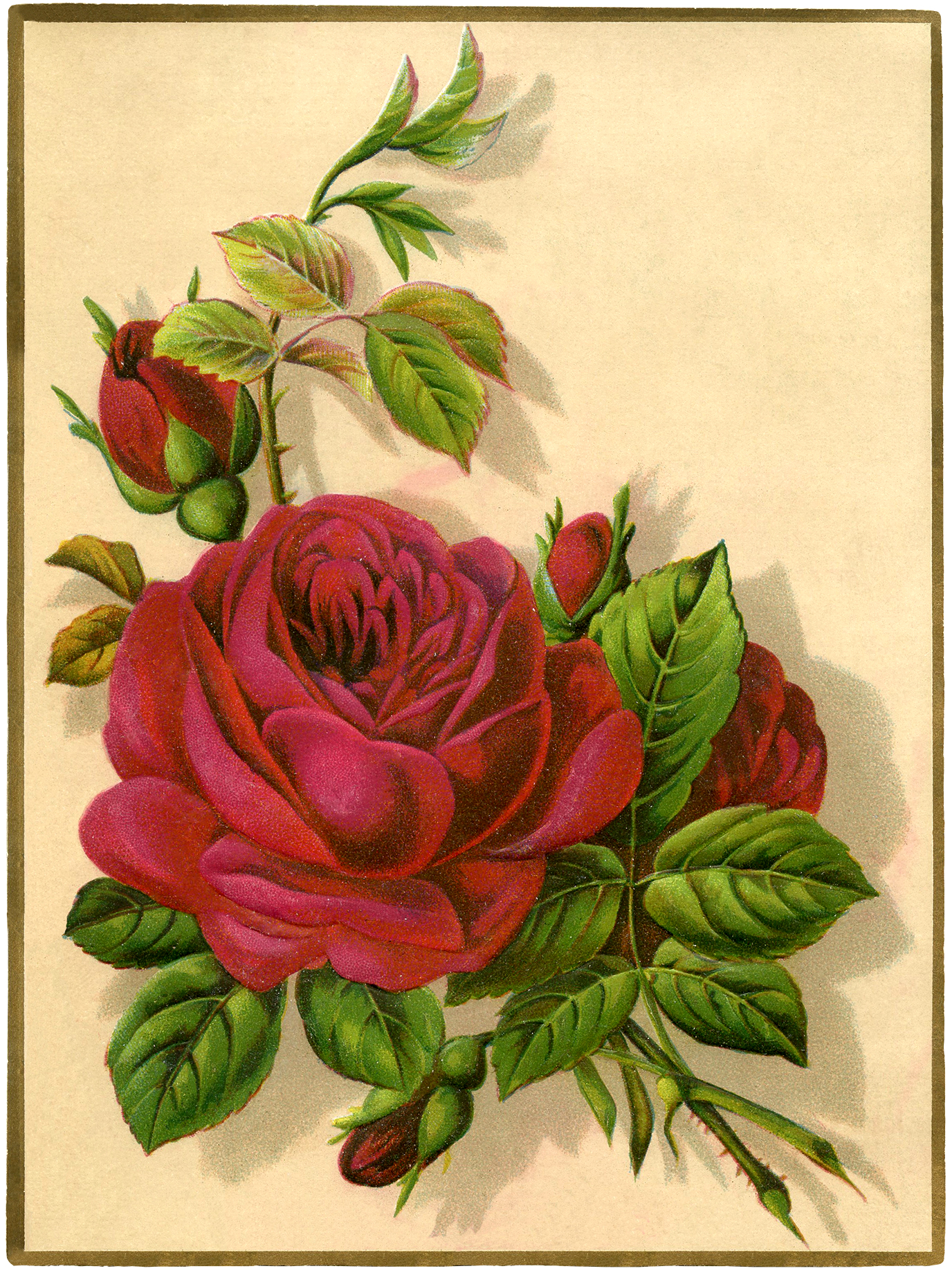 Divine image with regard to printable rose