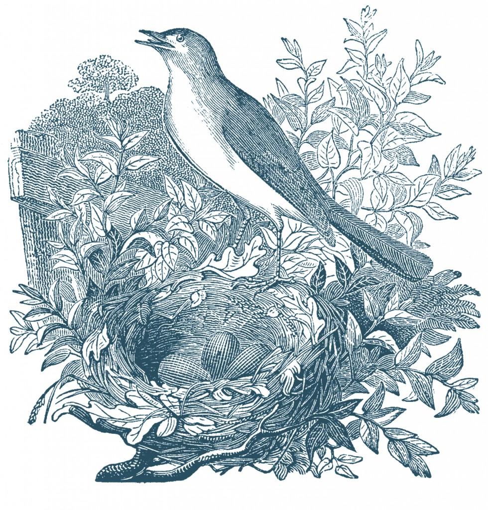 Free Vintage Bird Engravings
